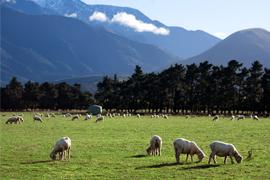 雄大な自然が広がるニュージーランド