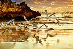 ウェスタンオーストラリア州(WA)