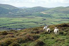 アイルランドで人気のプログラム