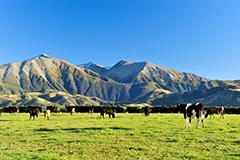 ニュージーランドで人気のプログラム